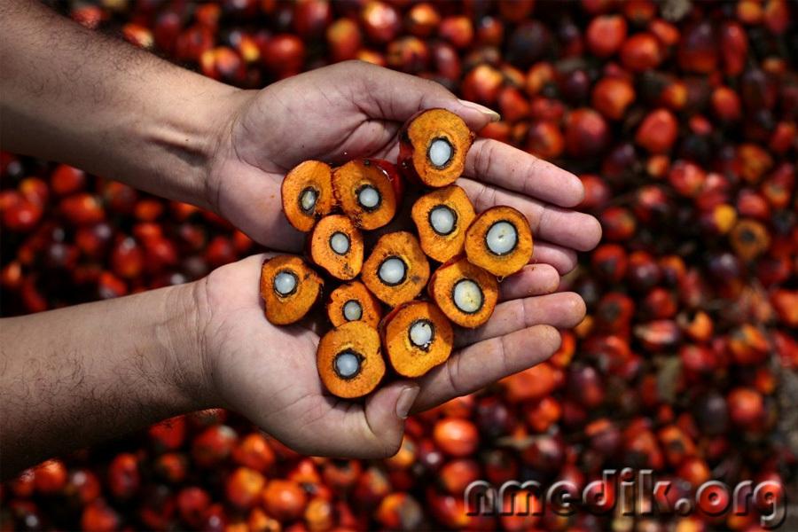 Из чего состоит пальмовое масло