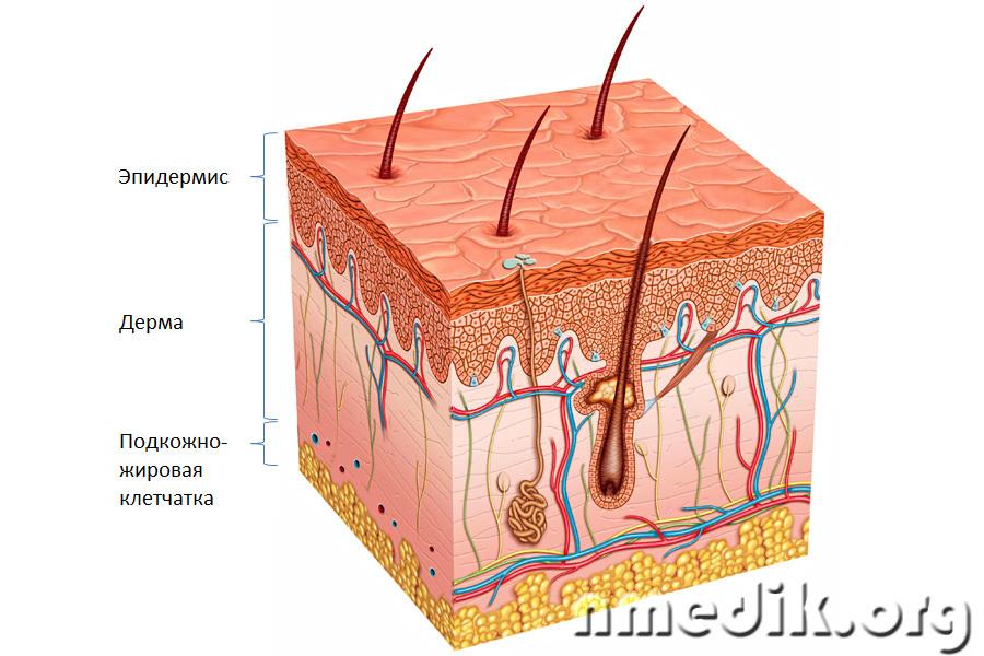 очищение организма от глистов и паразитов