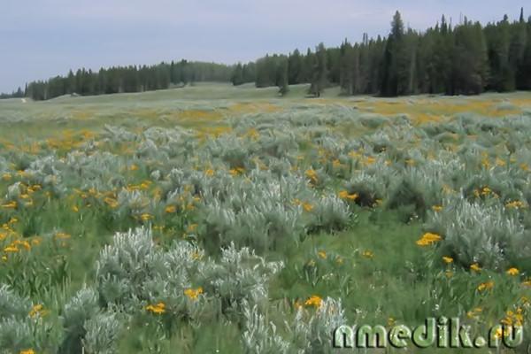 Пыльца цветущих трав способна вызвать аллергию