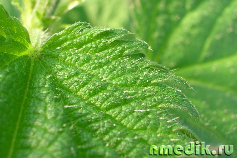 мягкое очищение организма от шлаков и токсинов