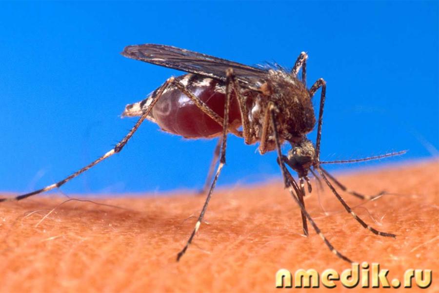 Малярия фото