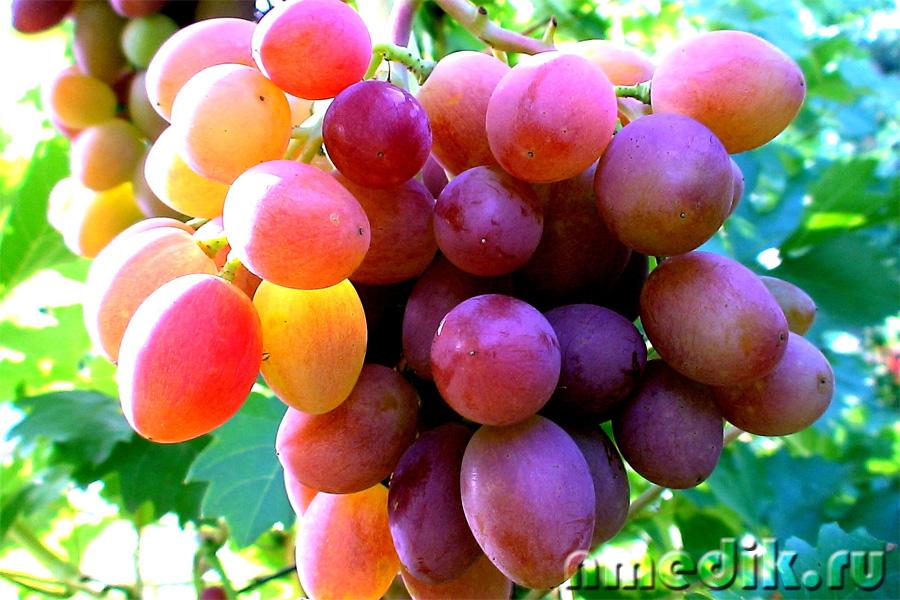 Лечение виноградом - Онкологические заболевания    Косточки винограда при лечении рака